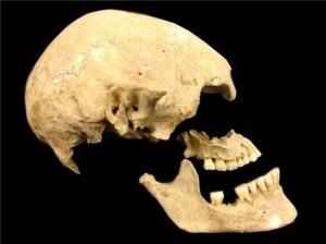 Eur skull