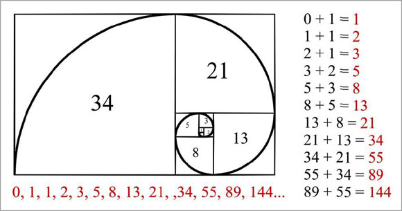 Image result for Fibonacci Sequence in Phi Ratio