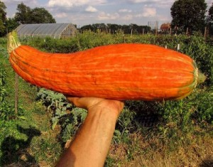Gete-okosomin-seedkeepingDOTtumblerDOTcom1-400x314