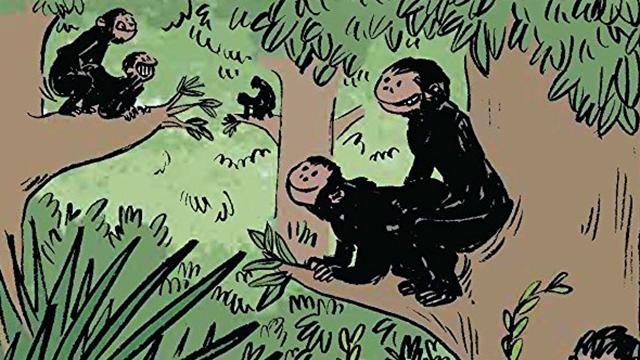 chimps mating
