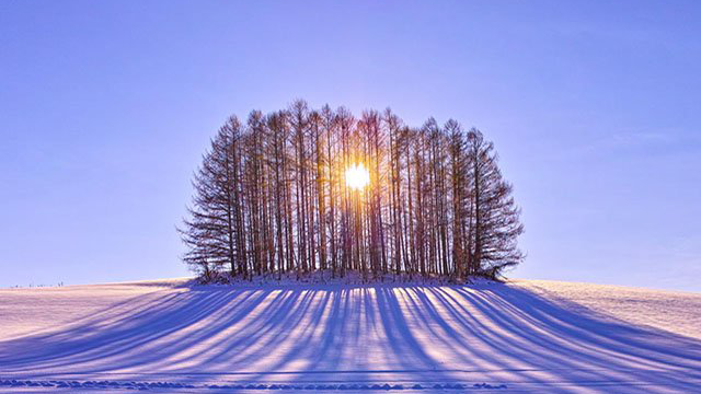 The sun shines through a stand of trees on a snowy landscape.
