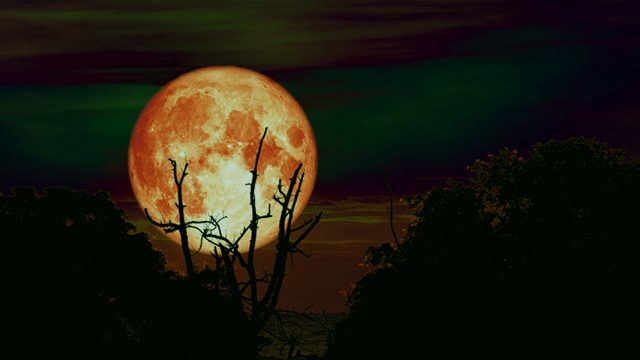 A full moon seen through the branches of a tree